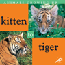 Animals Growing Up: Kitten to Tiger (Unabridged), by Jason Cooper
