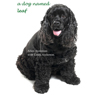 A Dog Named Leaf: The Hero from Heaven Who Saved My Life (Unabridged), by Allen Anderson