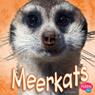 Meerkats Audiobook, by Jody Sullivan Rake