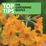 Top Tips for the Gardening Novice, by Tom Petherick