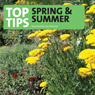 Top Tips for Spring and Sumer, by Tom Petherick